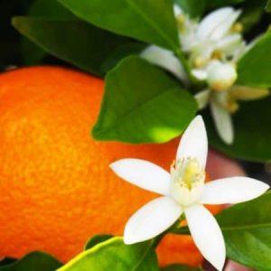 Fleurs-oranger-orange